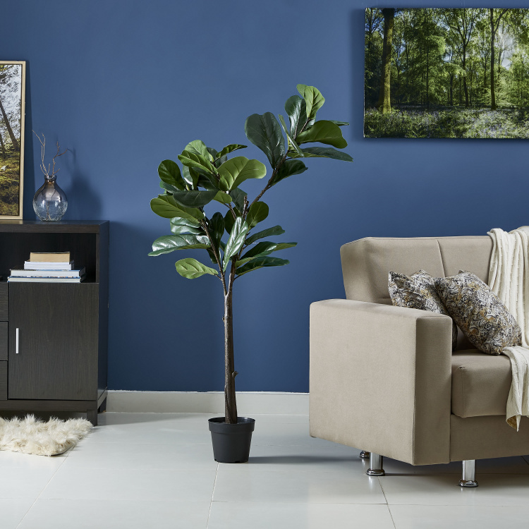 Ficus Plant in Concrete Pot - 148 cms
